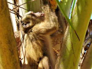 Mono en Parque Natural Lençois Maranhenses
