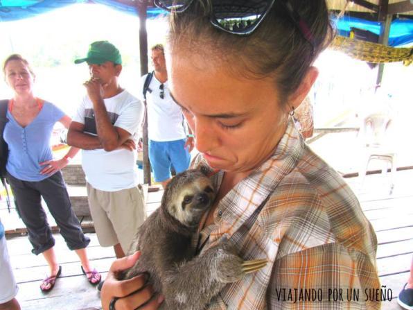 Carol y perezoso en Selva Amazónica: El lado salvaje de la naturaleza.