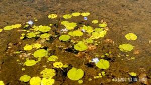 Flor Jardin Guyana Georgetown Viajando por un sueño