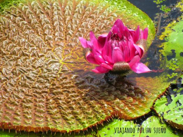 VictoriaRegia Selva Amazónica: El lado salvaje de la naturaleza.