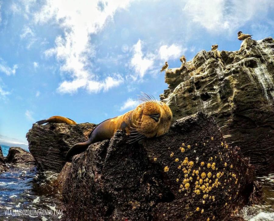 lobo viajando por un sueño galápagos