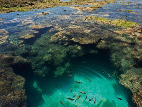 piscinas-porto-galinhas-vx1s-de-vivaportodegalinhas.com.br