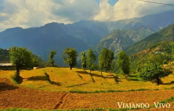 Cultivos en la montaña en el norte de India