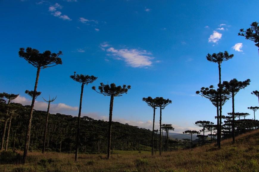 Paisagens. Pousada Fazenda Monte Negro - São José dos Ausentes - RS - Brasil Foto: Ivane Fávero