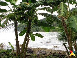 Platanal en la playa de La Miel, Panamá