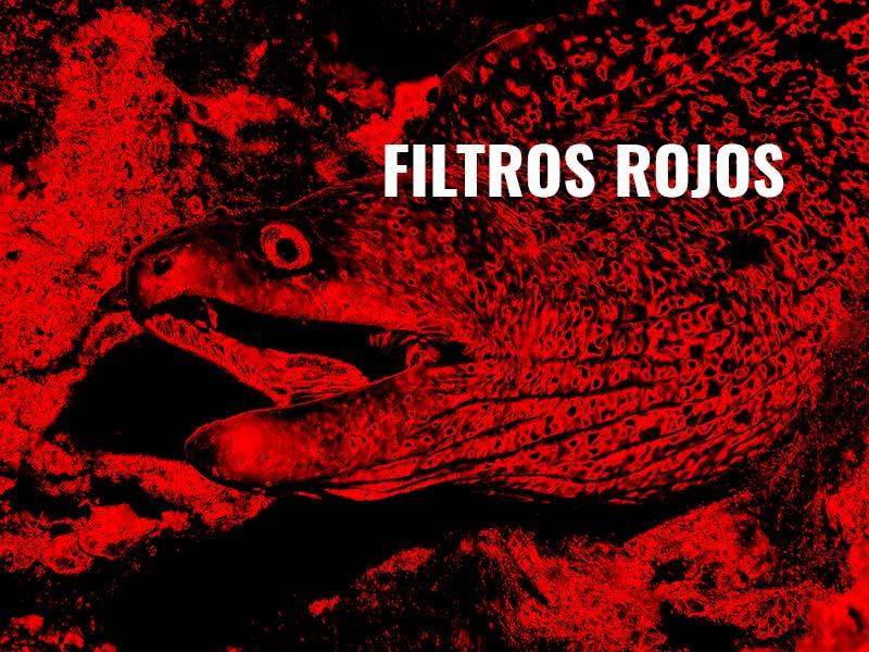 filtro rojo fotografia submarina y videosub