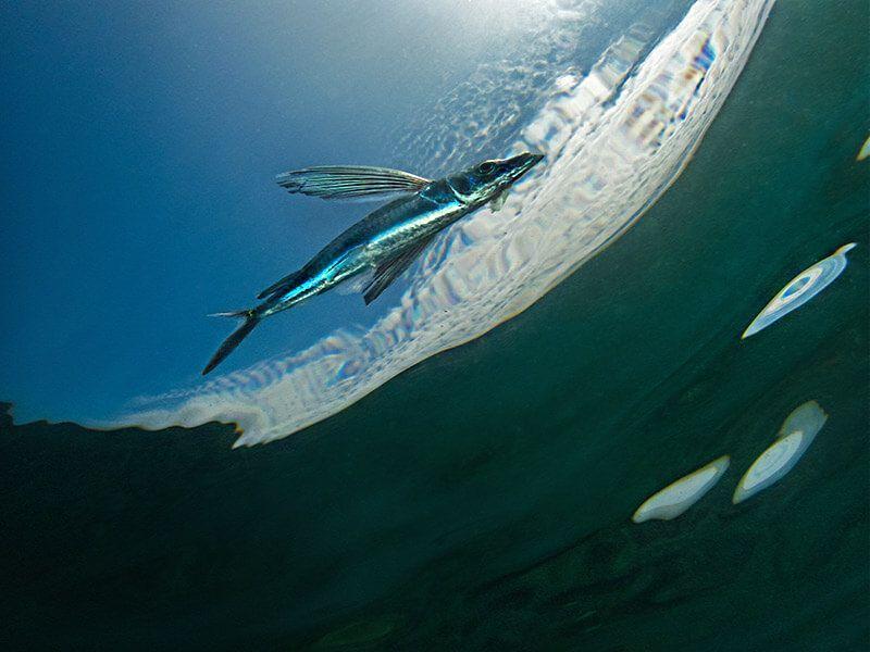 composición fotografía submarina