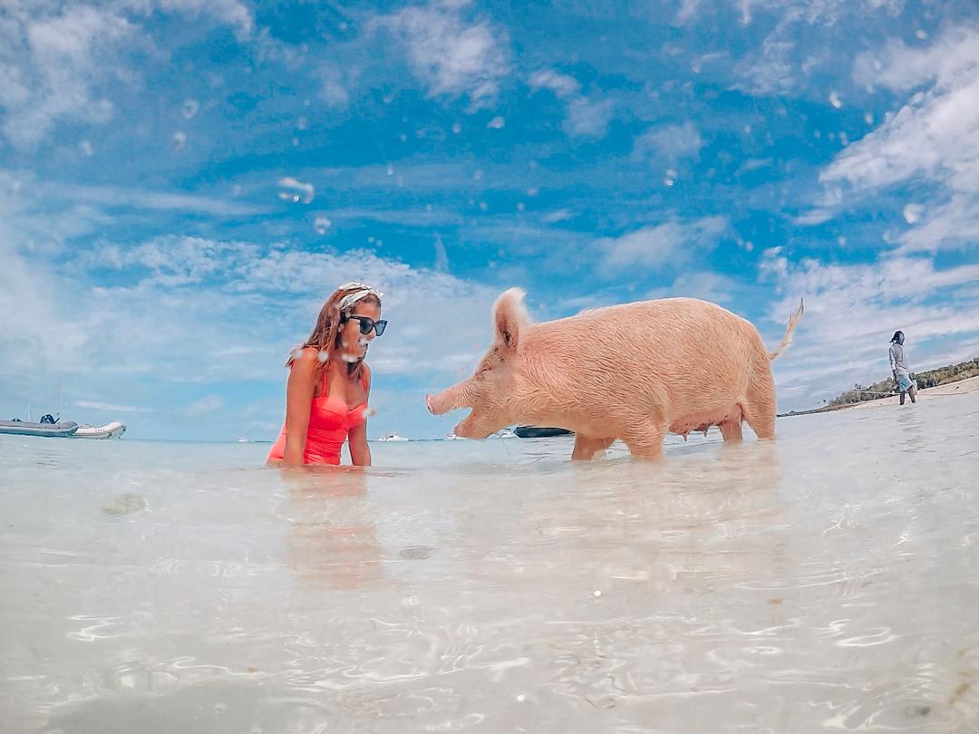 Playa de cerditos nadadores en Exuma Bahamas Pig beach tour Harbor Safaris