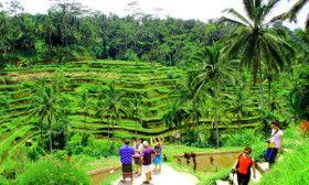 tour Alrededores Ubud - Arrozales Tegalalang