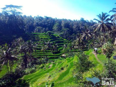 Arrozales Tegalalang Bali