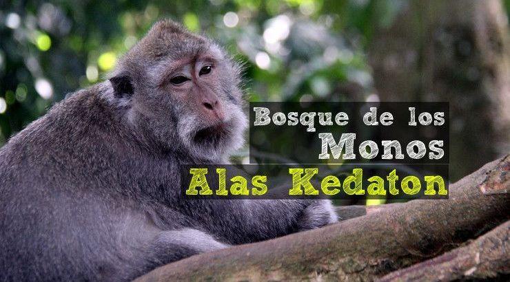 bosque-monos-alas-kedaton-0