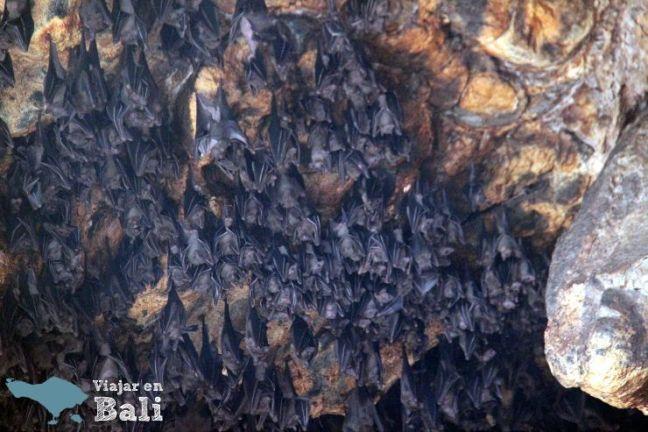 cueva-de-los-murcielagos-pura-goa-lawah-3