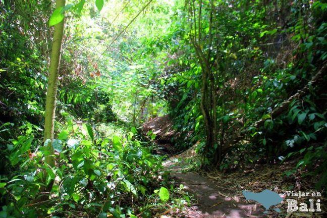 trekking-hidden-canyon-sukawati-bali-2
