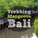 Trekking Bosque de Mangrove en el Sur de Bali