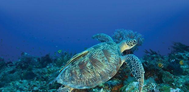 tortugas islas gili