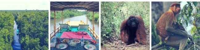 tour klotok orangutanes borneo