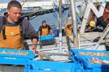 descarga-pescado-puerto-rapita