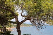 Pinares que tocan el mar Mediterráneo