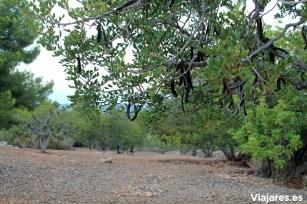 Campos de algarrobos , olivos y bosques rodean la localidad de Mont-roig del Camp
