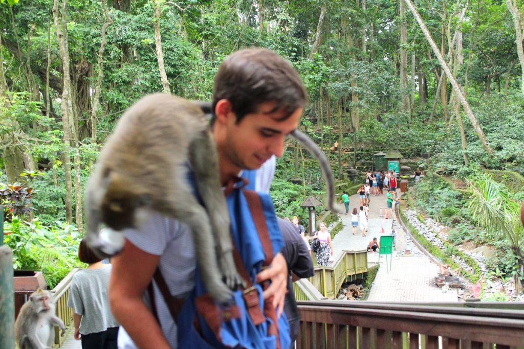 El mono ninja robándome el omeprazol en el Monkey Forest de Ubud