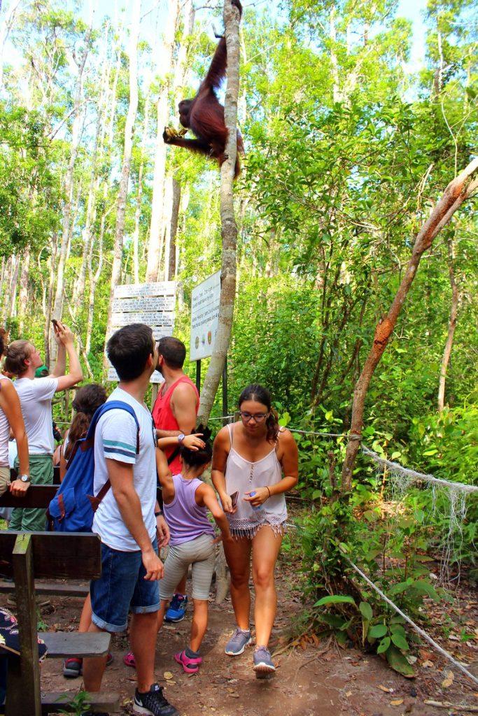 Orangutanes por encima nuestro