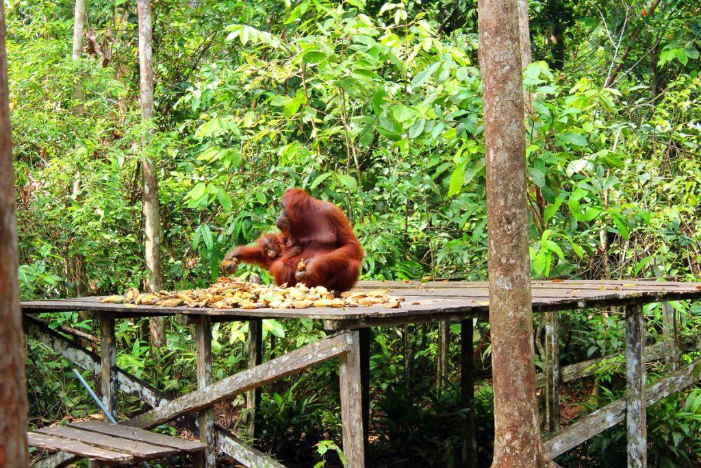 Comedero de La pasarela de Camp Pondok Tangui