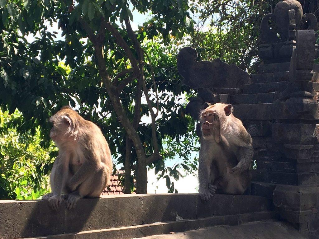Monos custodiando la entrada de Labuan Sait