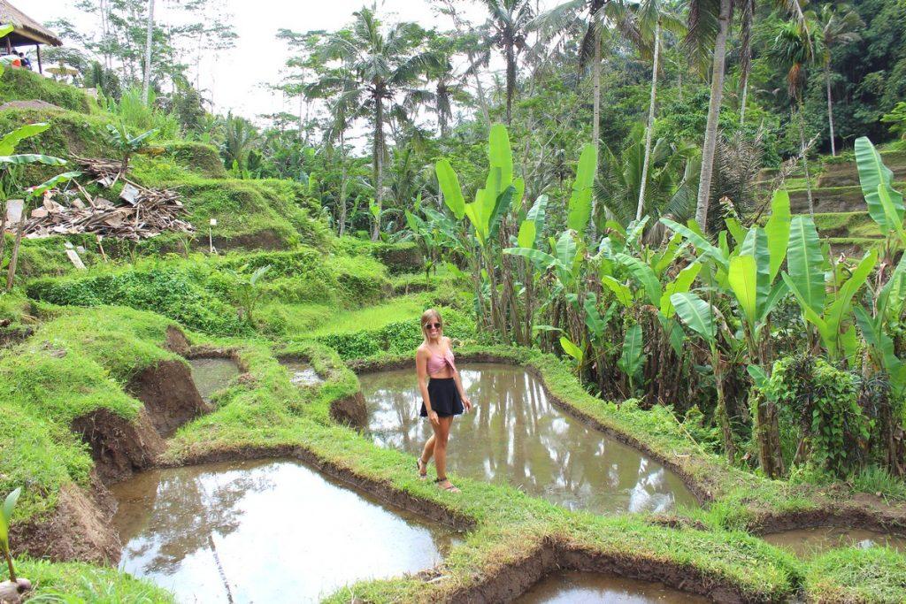 Caminando por los arrozales de Tegallaland