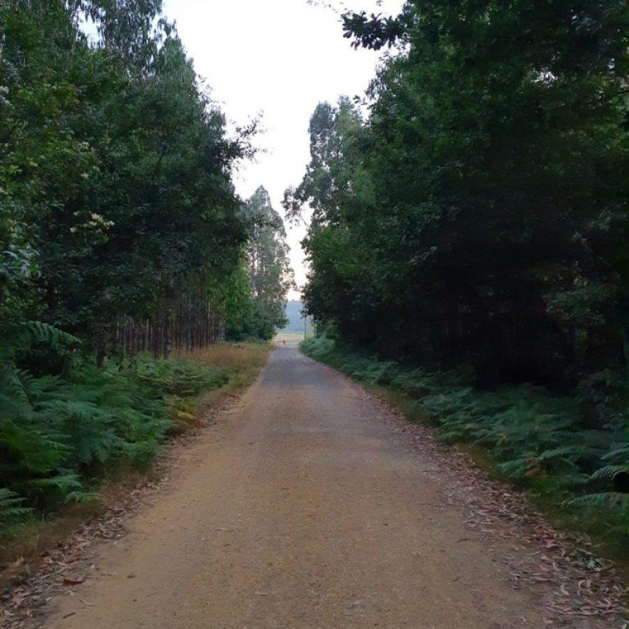 Cruzando los frondoses bosques del Camino de Santiago