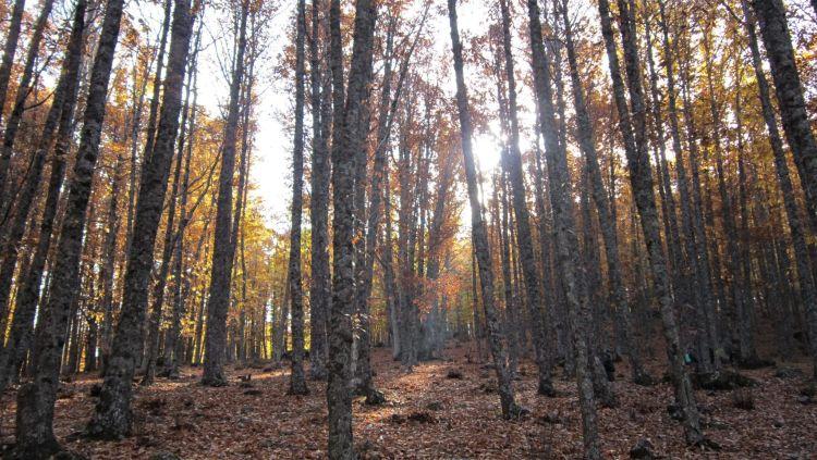 Árboles del Castañar