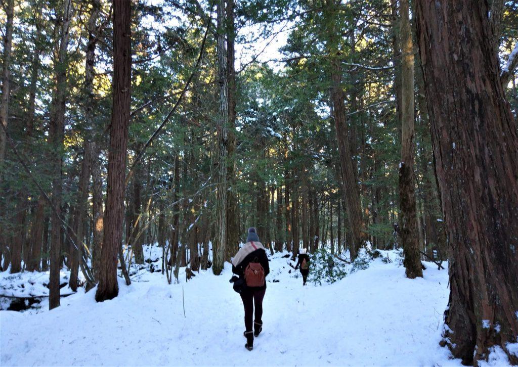 Aokigahara Jukai nevado
