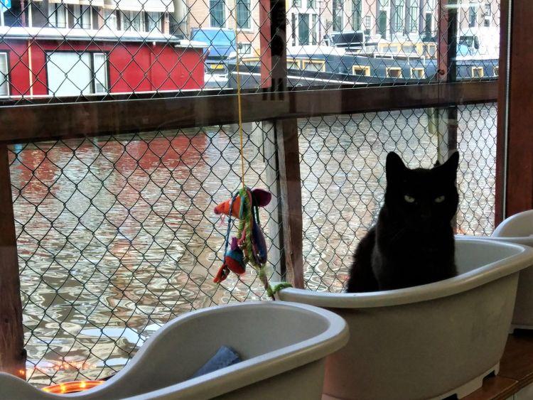Gato en el Poezenboot