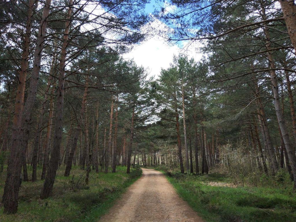 camino arboleda