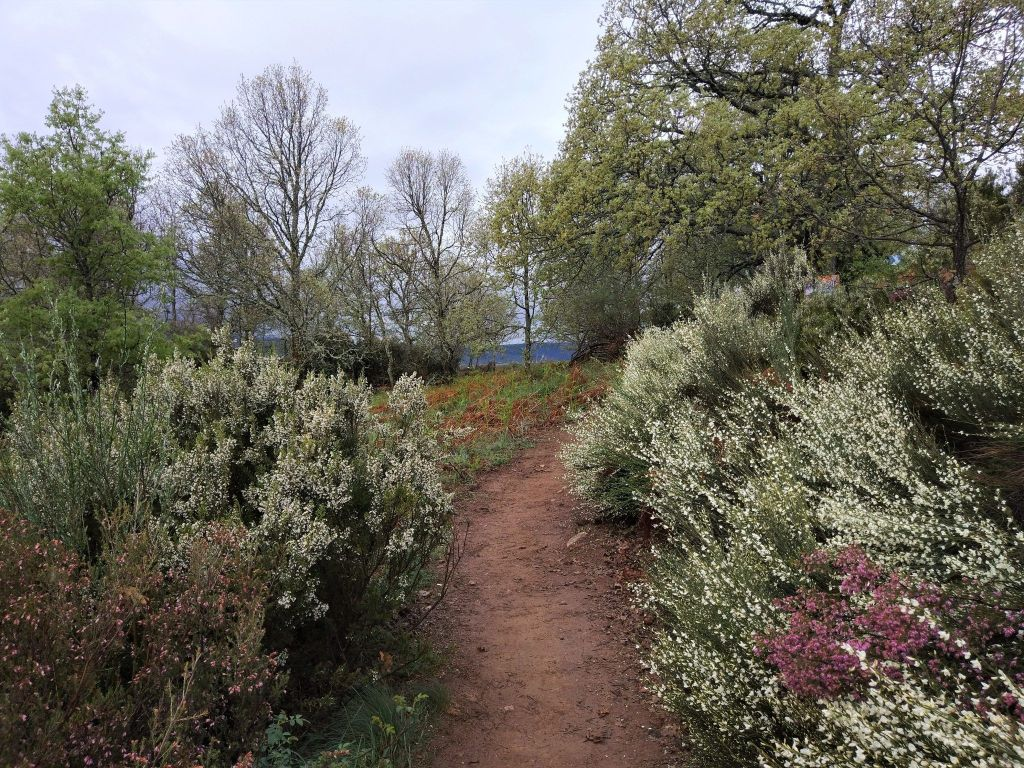 camino arbustos