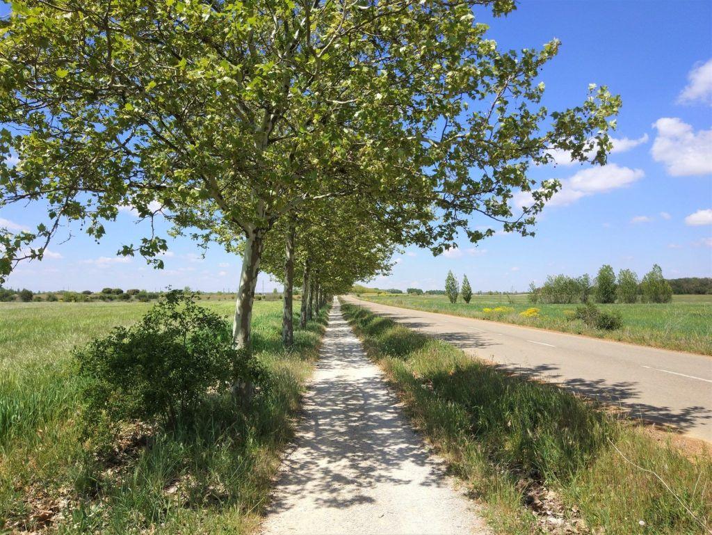 camino carretera