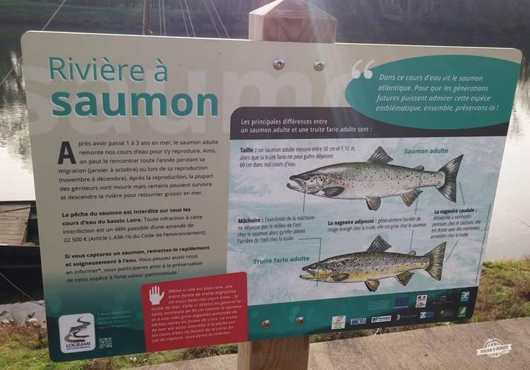 Salmão - Chouzé-sur-Loire