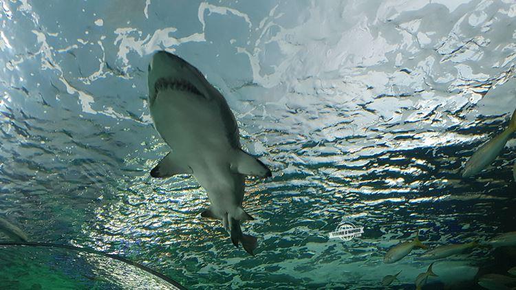 Vendo um tubarão de pertinho na Dangerous Lagoon