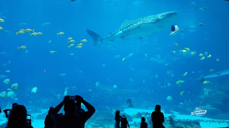Ocean Voyager - Georgia Aquarium. Blog Viajar o Mundo
