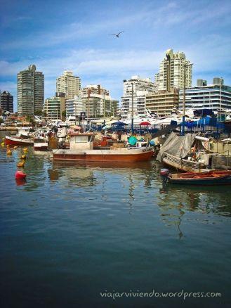 Que hacer en Punta del Este: el Puerto