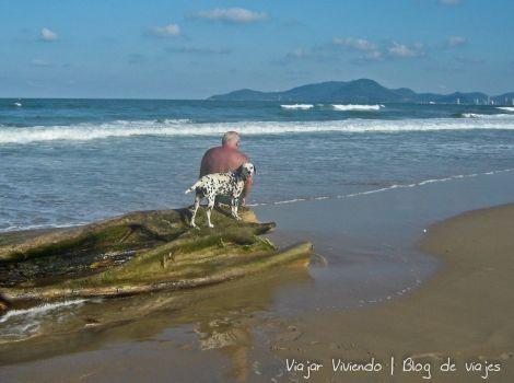 perro praia dos amores camboriu