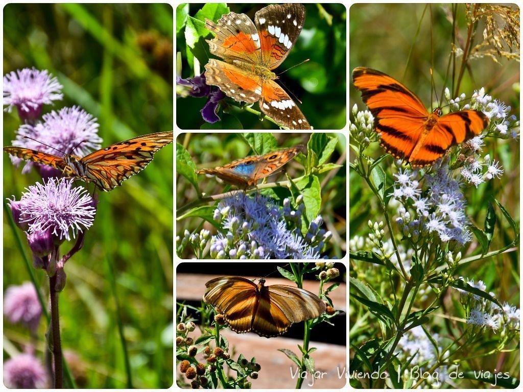 mariposas Esteros del Iberá