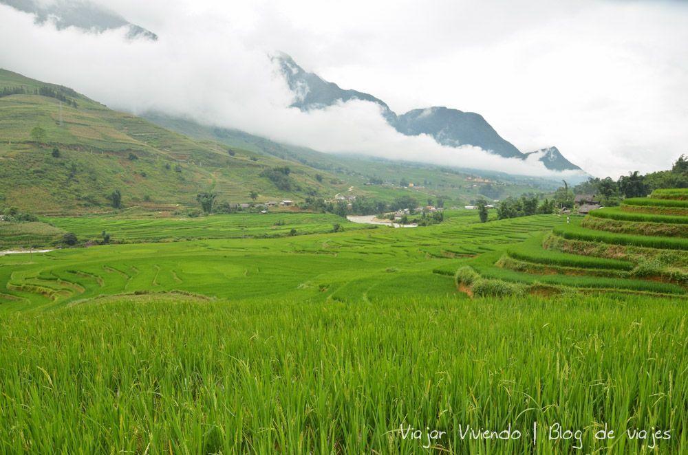 arroz sapa vietnam