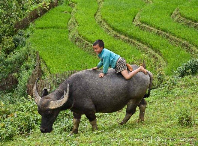 arrozales sapa vietnam