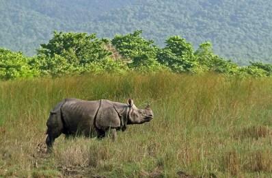 parque-nacional-de-royal-chitwan