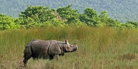 Parque Nacional de Royal Chitwan