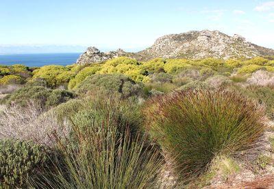 Acumulación de fynbos en la península de El Cabo