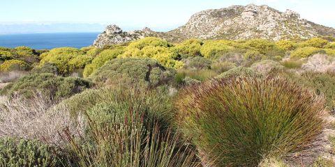 Zonas protegidas de la región floral de El Cabo