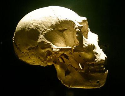 Cráneo de Miguelón, el Homo Heidelbergensis mejor conservado