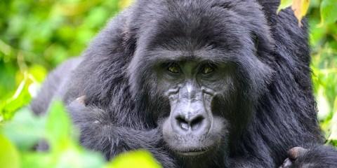 Parque nacional de la Selva Impenetrable de Bwindi