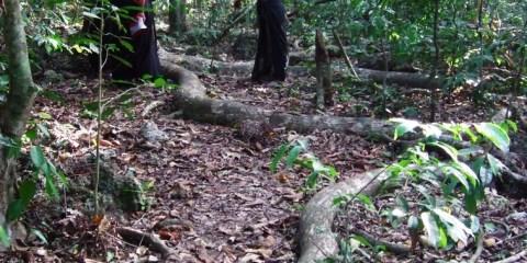 Bosques sagrados kayas de los mijikenda